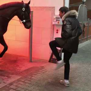 Thomas Müller and his Horse (horse on the left)
