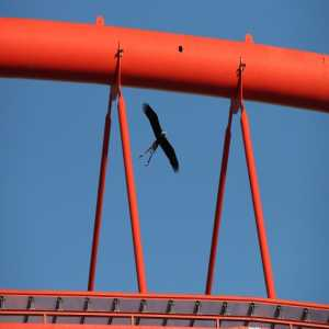 Benfica's eagle flies away from stadium during match