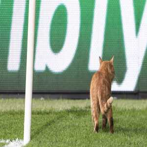 UEFA have fined Besiktas €34,000 for letting a cat interrupt their match against Bayern