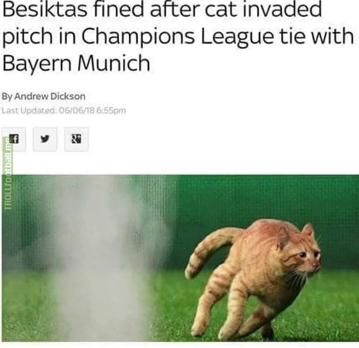 Besiktas fined £29,880 for a cat running on the pitch.  Russia fined £22,000 for racism.  Something's not right with this system. 🤔
