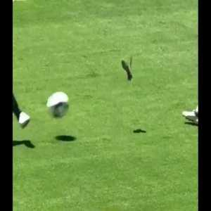 A bird got hit at the Man U vs. Earthquakes game today. Poor little guy.