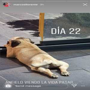 Marcos Llorente has named his dog 'Anfield'