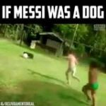 This dog has 99 dribbling 😱  Wait for the nutmeg 🤣