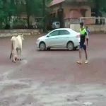 A cow in India playing football with the lads