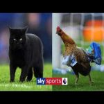 Five times animals have interrupted Premier League games