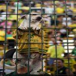 Defensa y Justicia x Santos - Copa Libertadores